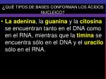 qu tipos de bases conforman los cidos nucleico