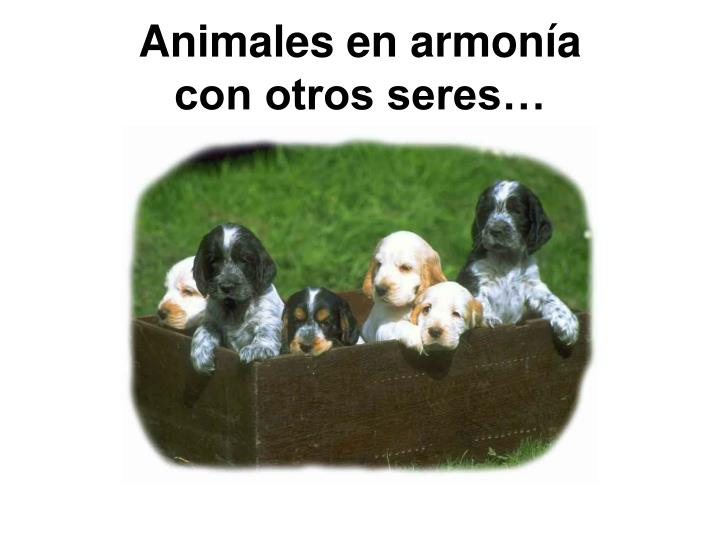 Animales en armonía