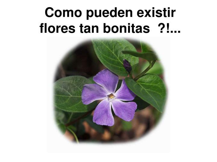 Como pueden existir flores tan bonitas