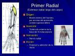 primer radial extensor radial largo del carpo