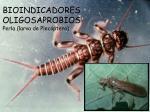 bioindicadores oligosaprobios perla larva de plec ptero