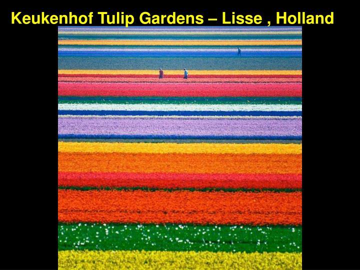 Keukenhof Tulip Gardens – Lisse , Holland