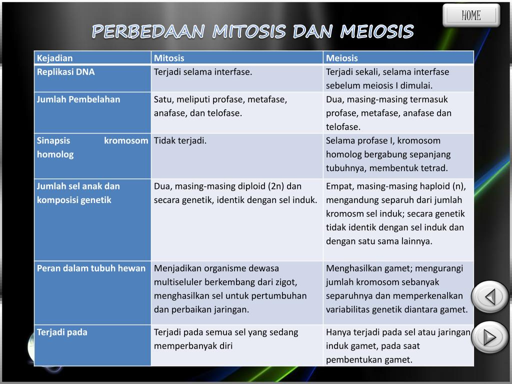 Ppt Mitosis Dan Meiosis Powerpoint Presentation Free Download Id 5040565