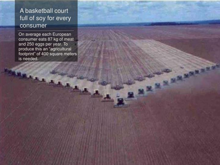 A basketball court full of soy for every