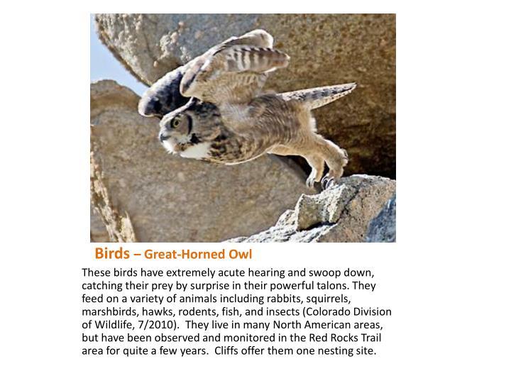 Birds great horned owl