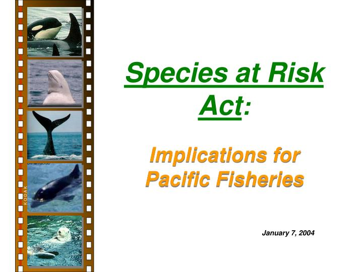 species at risk act n.