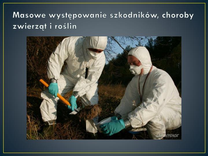 Masowe występowanie szkodników, choroby zwierząt i roślin