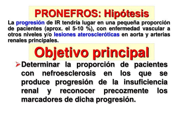 PRONEFROS: Hipótesis