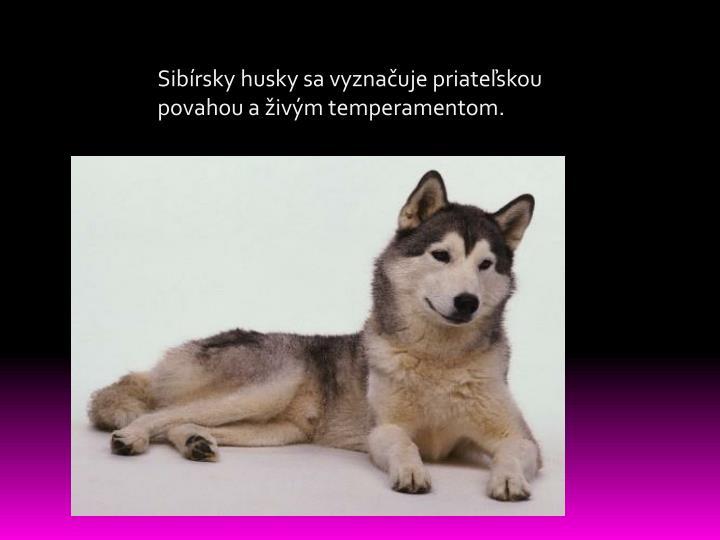 Sibírsky
