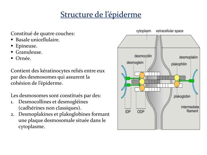 Structure de