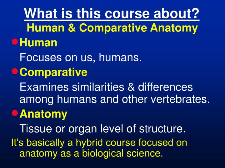 Ppt Bl 406 Human Comparative Anatomy Powerpoint Presentation