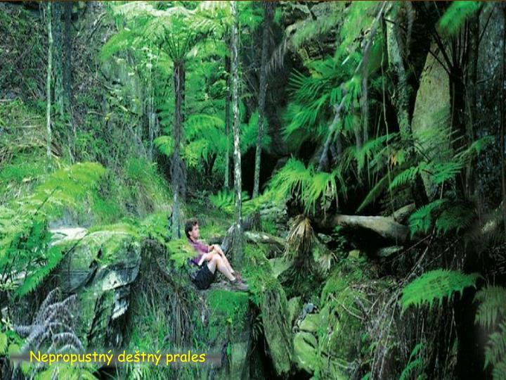 Nepropustný deštný prales