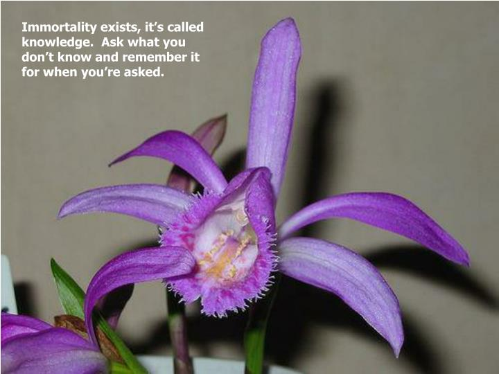 Immortality exists, it's called knowledge.  Ask what you don't know and remember it for when you're asked.