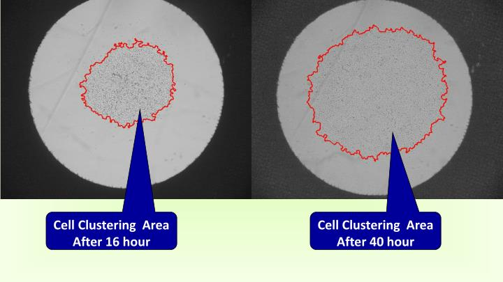 Cell Clustering  Area