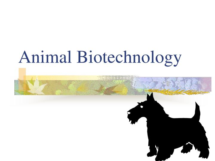 animal biotechnology in developing countries To highlight this issue, fao organised the international technical conference on agricultural biotechnologies in developing countries (abdc-10) that took place in guadalajara from 1 to 4 march 2010, hosted by the government of mexico.