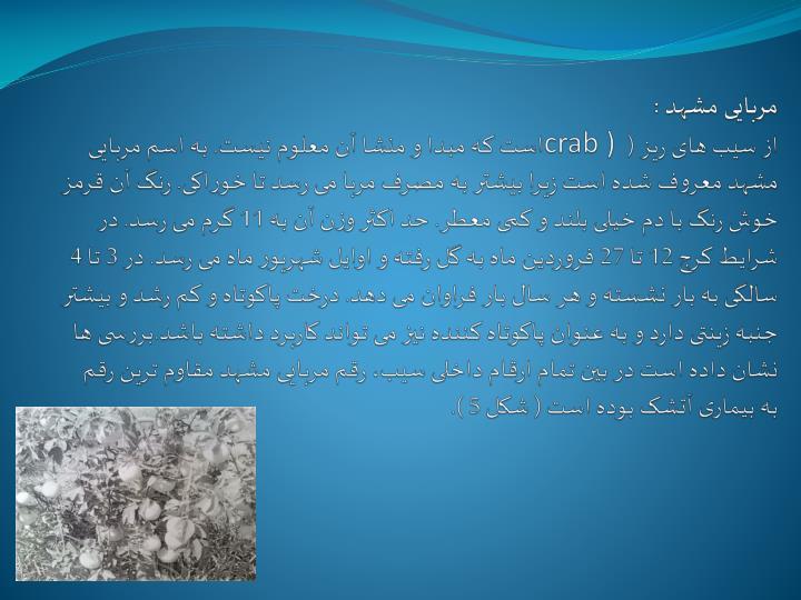 مربایی مشهد :