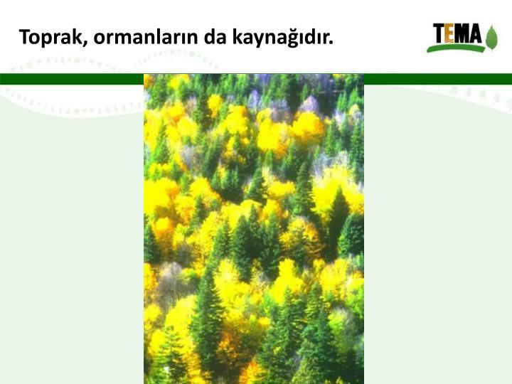 Toprak, ormanların da kaynağıdır.