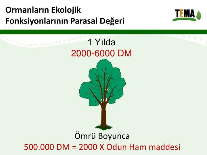 Ormanların Ekolojik
