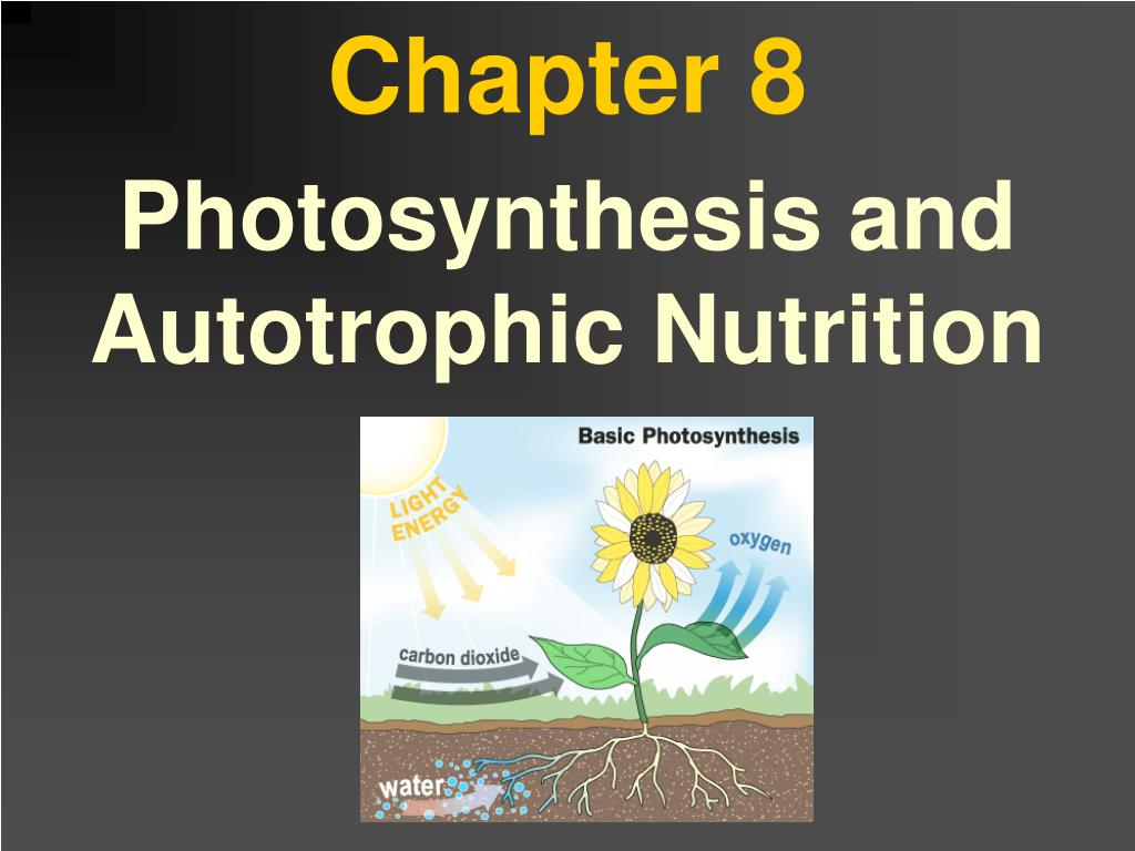 Ppt Chapter 8 Powerpoint Presentation Free Download Id 5056900