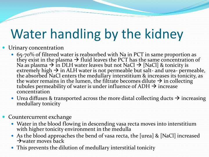 Water handling by the kidney