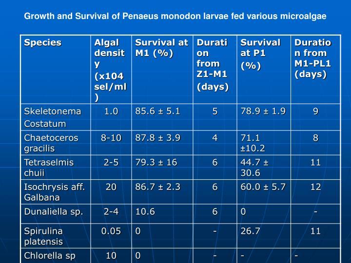 Growth and Survival of Penaeus monodon larvae fed various microalgae