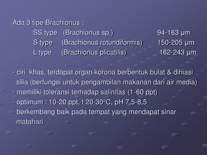 Ada 3 tipe Brachionus :