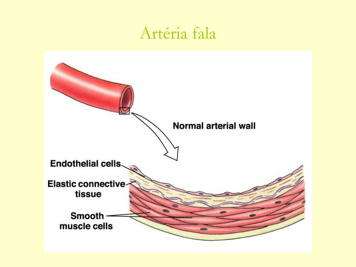 Artéria fala