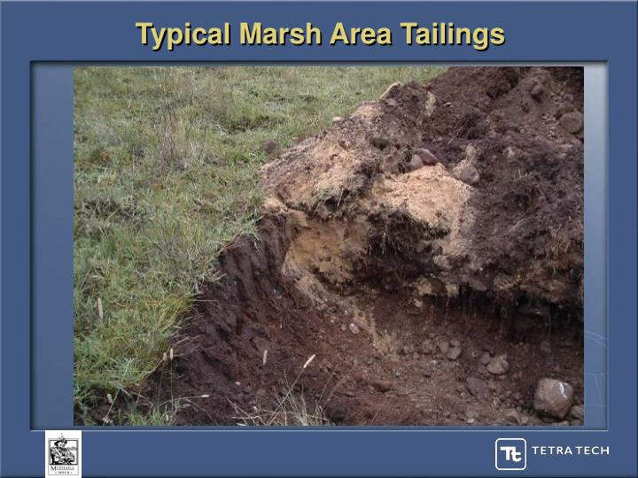 Typical Marsh Area Tailings