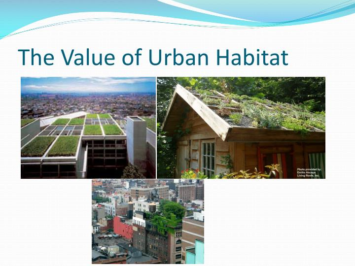 The Value of Urban Habitat