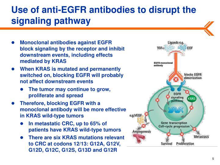 Use of anti-EGFR antibodies to disrupt the signaling pathway
