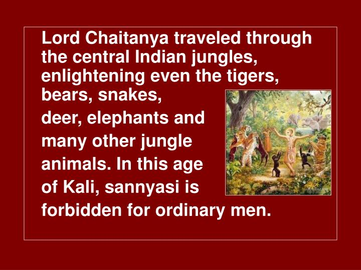 Lord Chaitanya traveled through the central Indian jungles, enlightening even the tigers, bears, snakes,