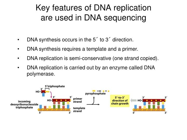 Key features of DNA replication are used in DNA sequencing