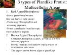 3 types of plantlike protist multicellular algae