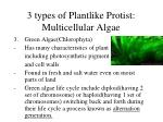 3 types of plantlike protist multicellular algae1