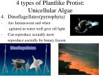 4 types of plantlike protist unicellular algae2