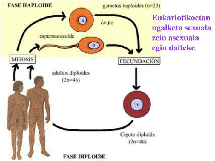 Eukariotikoetan ugalketa sexuala zein asexuala egin daiteke
