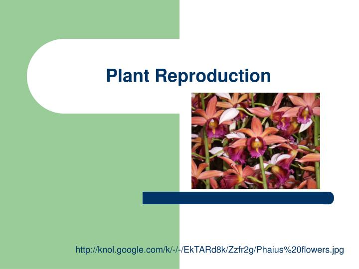 plant reproduction n.
