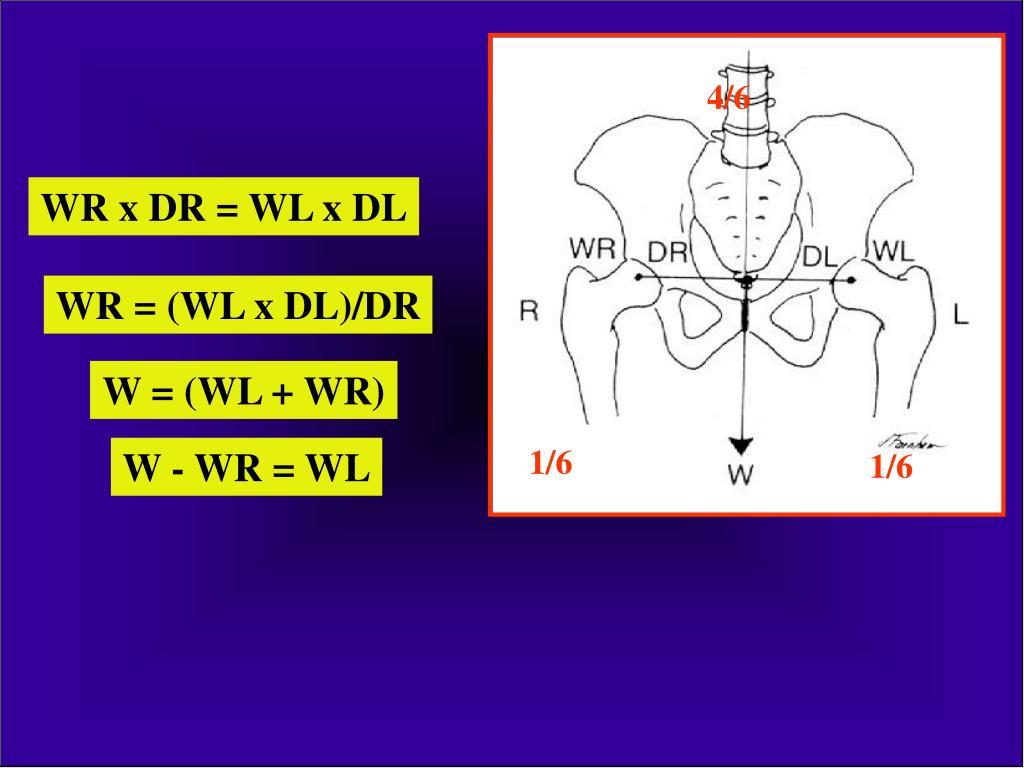 csípőízület 1