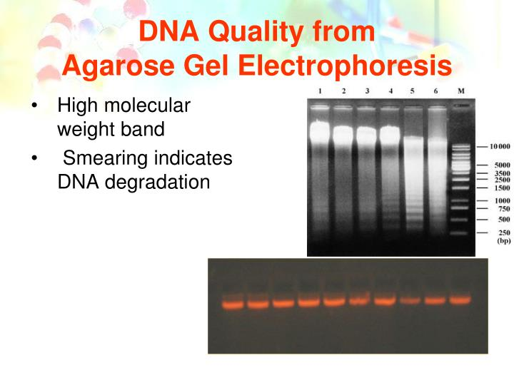 DNA Quality from