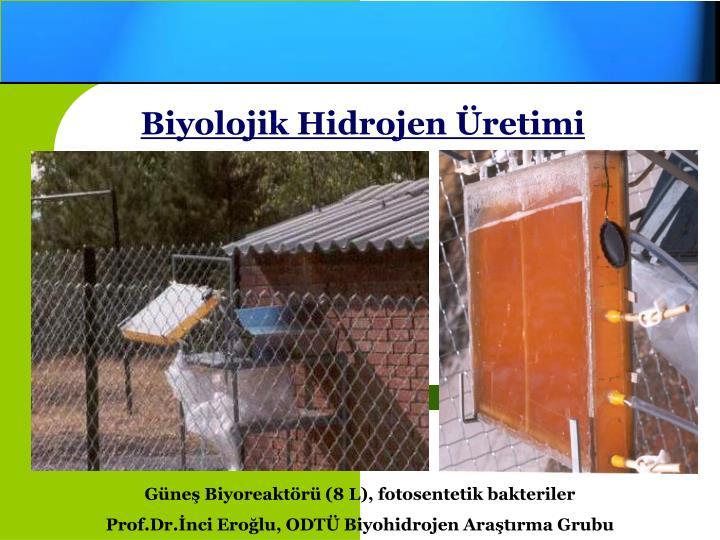 Biyolojik Hidrojen Üretimi
