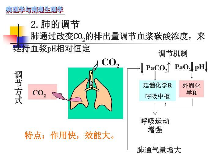2.肺的调节