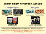 bakteri dalam kehidupan manusia