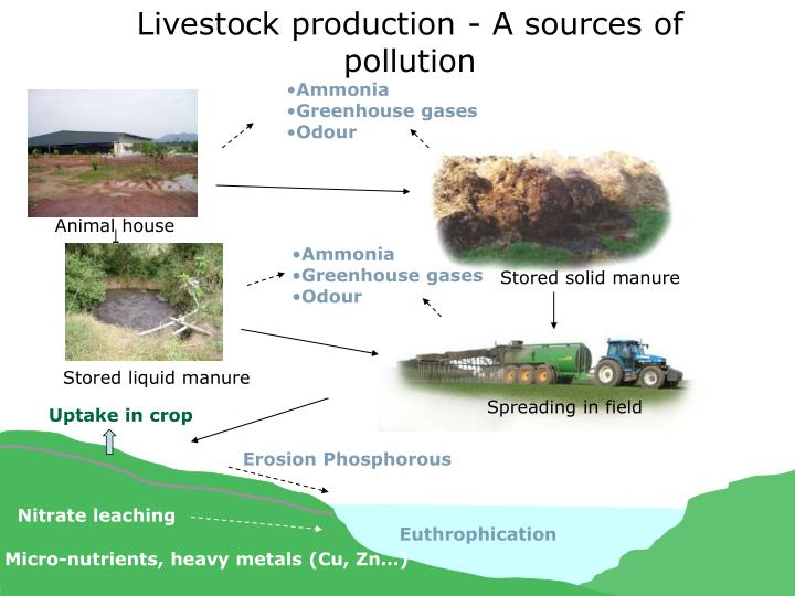 Livestock production - A sources of pollution