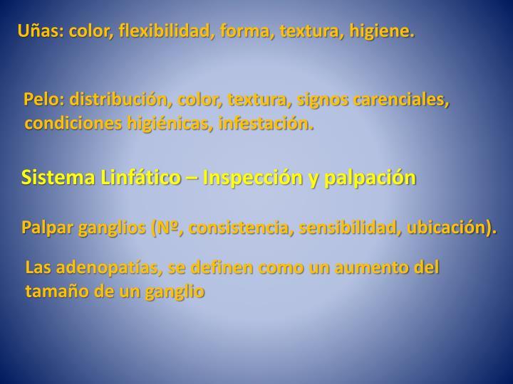 Uñas: color, flexibilidad, forma, textura, higiene.