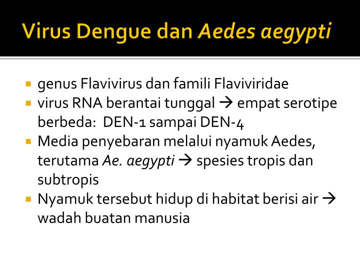Virus Dengue