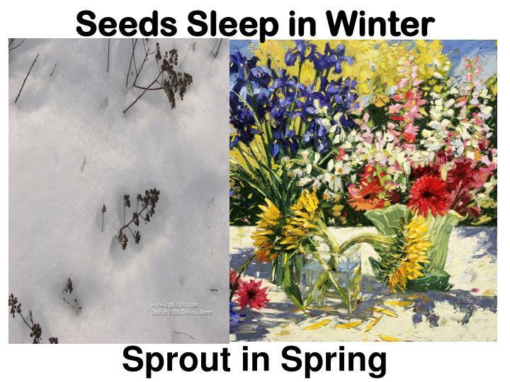 Seeds Sleep in Winter