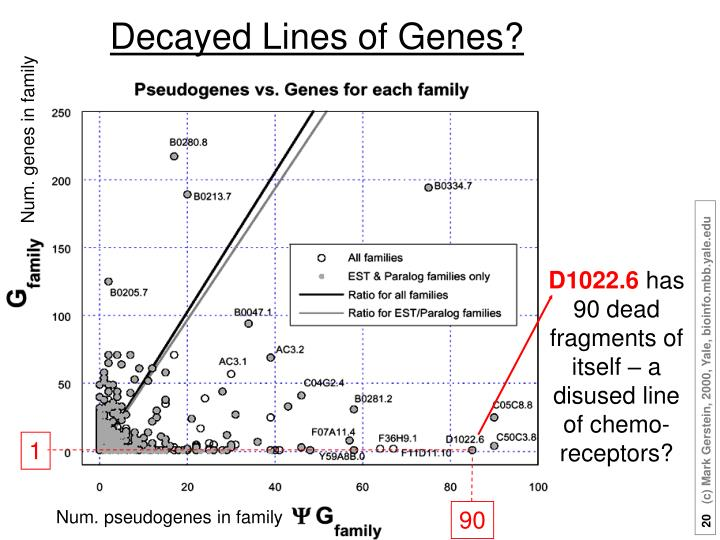 Decayed Lines of Genes?