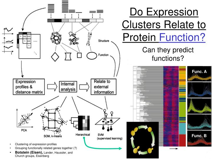 Do Expression Clusters Relate to Protein