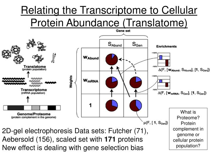 Relating the Transcriptome to Cellular Protein Abundance (Translatome)