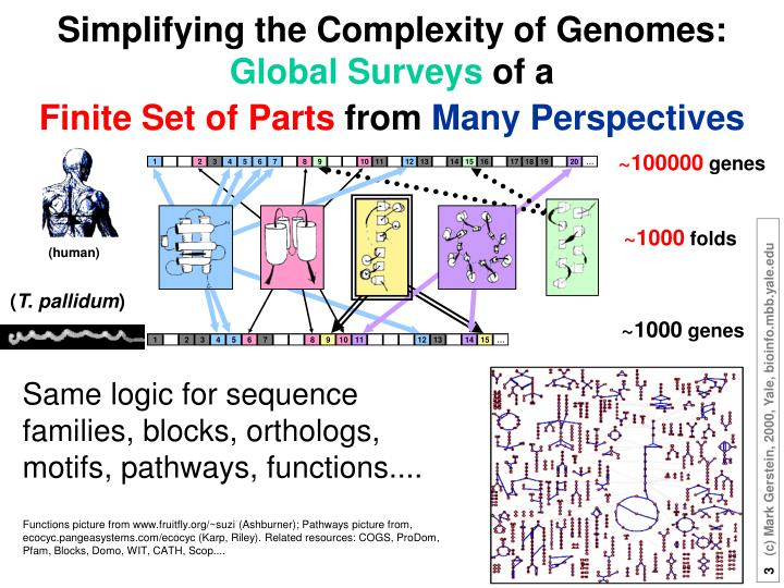Simplifying the Complexity of Genomes: